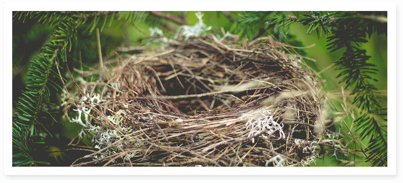 Nest Psychotherapy and Counselling
